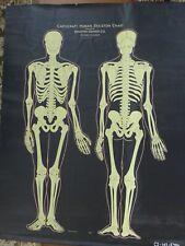 Vintage Antique Denoyer Geppert Skeleton Chart, Map, Chalkboard, Slate, Huge