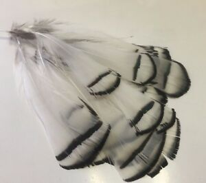 20 Hackle Black and White 5-10cm Pheasant Feathers DIY Craft Millinery Wedding