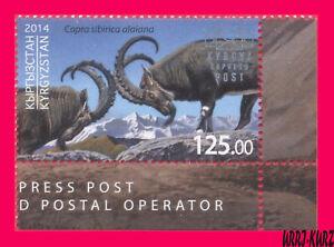 KYRGYZSTAN 2014 Fauna Wild Animals Mountain Goat Capricorn Ibex 1v Mi KEP 8 MNH