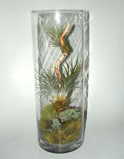 """9"""" Glass Pillar Terrarium, Tillandsia, Air Plant, Moss, Living Art, Great Gift"""