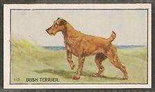 1926 Uk George Vernon Stokes Dog Art Sanders Custard Jelly Card Irish Terrier