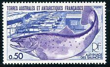 TIMBRE T.A.A.F. / TERRES AUSTRALES NEUF  N° 71 ** FAUNE  POISSON