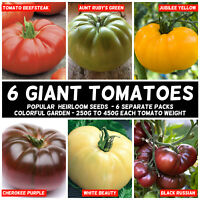 Tomato GIANT HEIRLOOM MIX 90 Seeds 6 TYPE vegetable garden spring summer RAINBOW