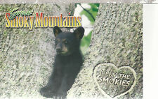 Bear   I Luv The Smokies  Great Smoky Mountains TN  Unused Chrome Postcard 12104