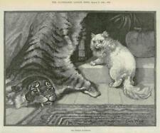 1890 ANTIQUE PRINT-FINE ART PHOTO Noble Kinsman Chat Tigre Tapis (025)
