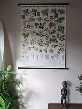 VINTAGE PULL  ROLL DOWN BOTANICAL SCHOOL WALL CHART  POSTER OF CONIFERS & SHRUBS