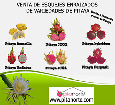 Pack 6 variedades de esquejes de PITAYAS (Pack 6 cuttings varieties PITAHAYAS)