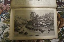 1881 neue Welt 25 Honigsucher Stiefmütterchen Mohn Kafir-Land