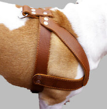 """Genuine Leather Dog Harness 1.5"""" wide 28""""-34"""" chest Amstaff, Pitt Bull, Boxer"""