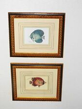 WALL ART PAIR HOTEL STYLE FRAMED FISH PRINTS HIGH-END  NICE ART WORK & FRAMES!!