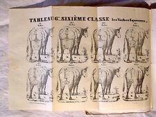 GUÉNON : Traité des vaches laitières,1838, élevage en Gironde