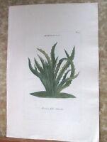 """Vintage Engraving,ANANAS FOLIO SINUATO,C.1740,WEINMANN,Botanical,20x13.5"""""""