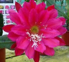 Cutting/Leaf Sub-tropical Cactus & Succulent Plants