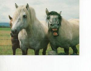 postcard: THREE HORSES - WELSH PONIES