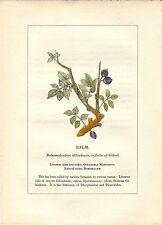 Stampa antica PIANTE DELLA BIBBIA Balsamodendron MIRRA 1842 Old antique print