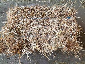 Strohballen Stroh 14 kg Qualität von der schwäbischen Alb für Nager Einstreu