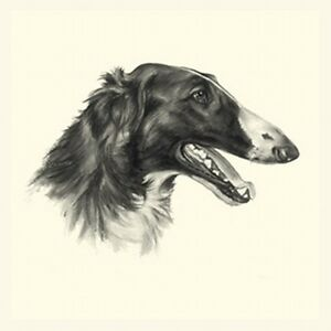 Dog Show Ring Number Clip Pin Breed - Borzoi