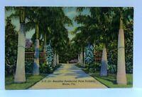 Miami Florida Residential Palm Pathway Linen Vintage Postcard