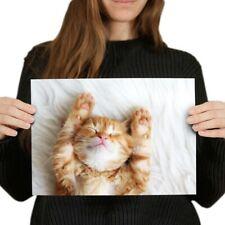 A4 - Cute Sleeping Ginger Cat Kitten Poster 29.7X21cm280gsm #13113