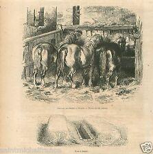 Chevaux Percheron Ecurie Fosse Fumier Charles Jacque GRAVURE ANTIQUE PRINT 1857