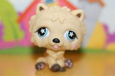 Littlest Pet Shop Figur Hund Chow Chow #662, super niedlich
