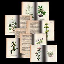 Heilpflanzen Heilkräuter Kräuter Apotheke Kräuterbuch Gesundheit Heilung l
