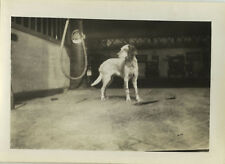 PHOTO ANCIENNE - VINTAGE SNAPSHOT - ANIMAL CHIEN POMPE À ESSENCE STATION SERVICE