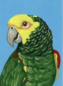 ACEO ATC Original  Painting Double Yellow Head Amazon Parrot Bird -Carla Smale