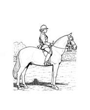 """Malbuch * 32 Malvorlagen """" Pferde """" Ausmalbilder als PDF * Kinder malen"""