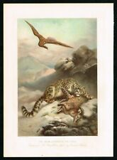 1898 Snow Leopard & Eagle, Victorian Antique Print - Boys Own Paper