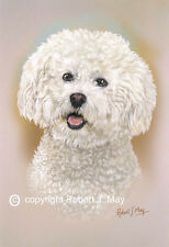 Bichon Frise Head Study Print by Robert J. May