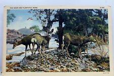 Animal Deer Plentiful Here Postcard Old Vintage Card View Standard Souvenir Post