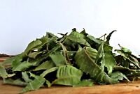 Neem Leaves Azadirachta Indica Dried Whole Indian Neem Tree 50g to 1Kg Free Ship