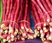 Bean Pole Yard Long Red Noodle Non GMO Heirloom Vegetable Seeds Sow No GMO®