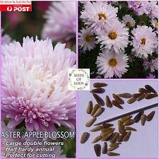 """25 ASTER KINGSIZE """"Appleblossom"""" SEEDS(Callistephus chinesis); Ideal for gardens"""
