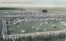 c1907 Sheep Ranch Scene near Belpre, Kansas Tinted Postcard