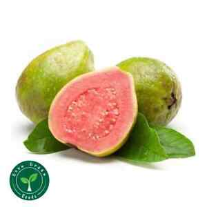 25 seeds of Pink Guava - PSIDIUM GUAJAVA - Guava - GIFT 5 seeds of Sunflower