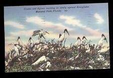 Cranes and Egrets Roosting National Park Florida Postcard