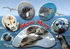 B98665 moin moin seal sceau france  animals animaux