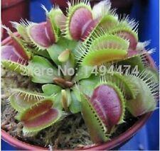 100pcs Catchfly Potted Plant Garden Venus Flytrap Seeds Insectivorous Plan