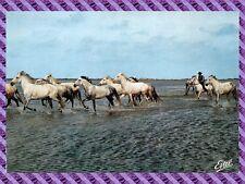 Camargue, Horses in Manade