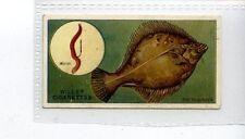 (Jd4639) WILLS,FISH & BAIT,THE FLOUNDER,1910,#31