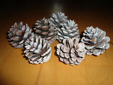 7 pcs Frosted Natural Pine Cones
