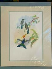 Original Hand Colored Lithograph Hummingbirds Gould Blue-Mantled Thornbill