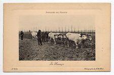 AGRICULTURE CAMPAGNE scenes champetres attelage de 8 boeufs le hersage paysages