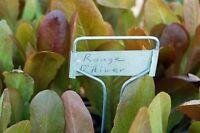 Heirloom Lettuce Seed Assortment- 10 Varieties- Over 3,000 Seeds