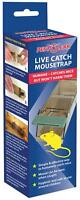 Pest Clear - Mouse Trap - Plastic Humane MTP-0401