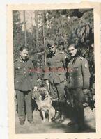 Foto, FP.Nr. 2759649, deutscher Schäferhund im August 1944 (N)20056