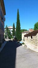 50 Zypressen Samen echte Mittelmeer Zypresse Säulenzypresse