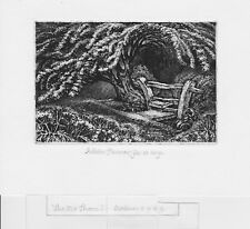 Robin Tanner original etching, 'The old Thorn'.